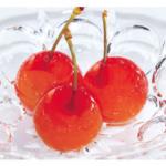 サエグサファクトリーのプチジェリチェリーは、食感と味わいが美味しい!メディア多数登場も納得!